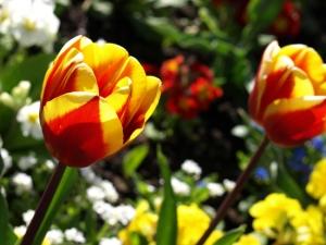 easter-tulip1